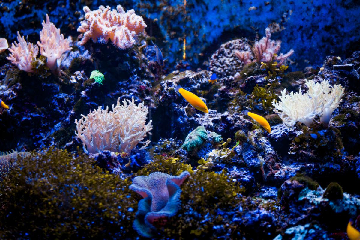 arrecife vida marina oceano pez submarino