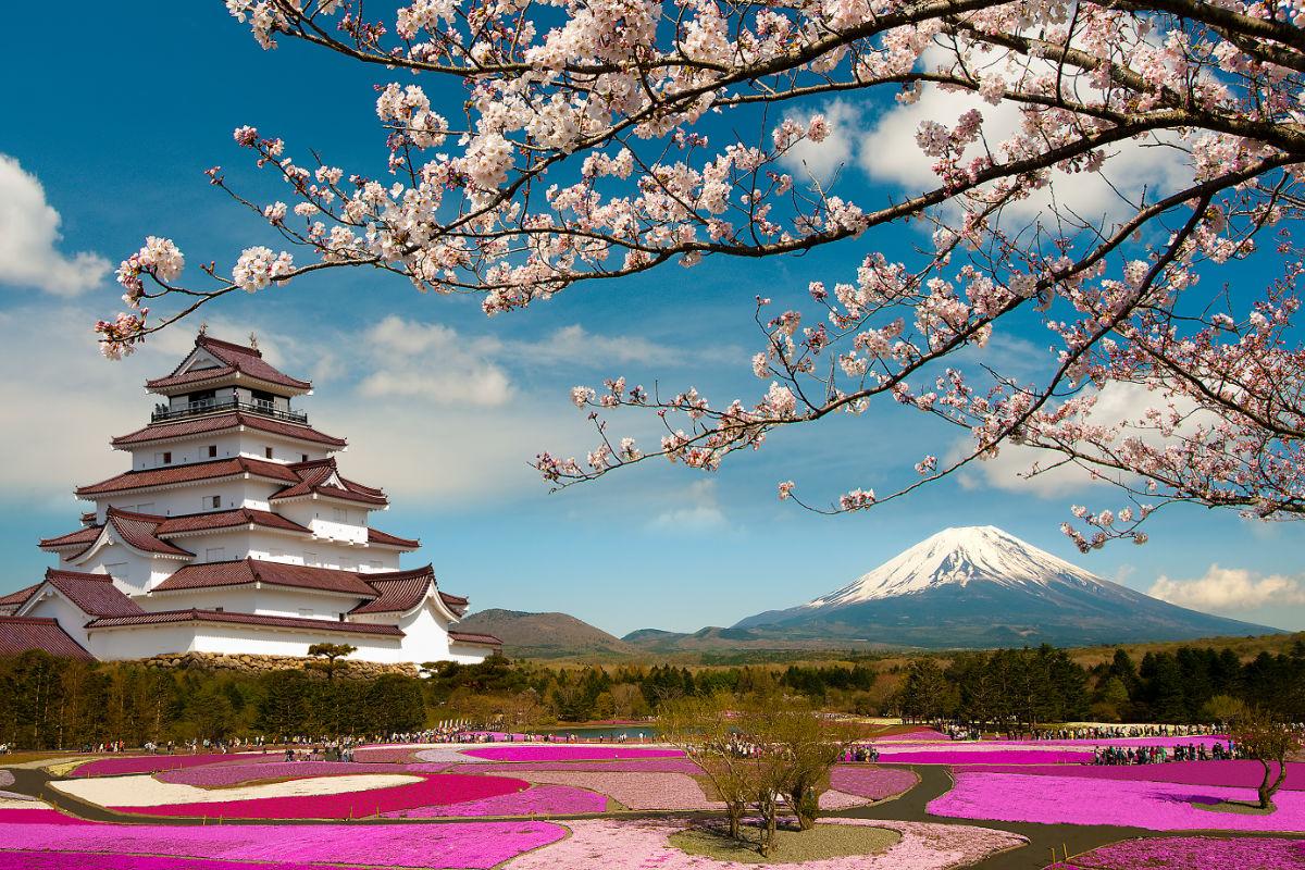 Japón paisaje cerezos te pagarán