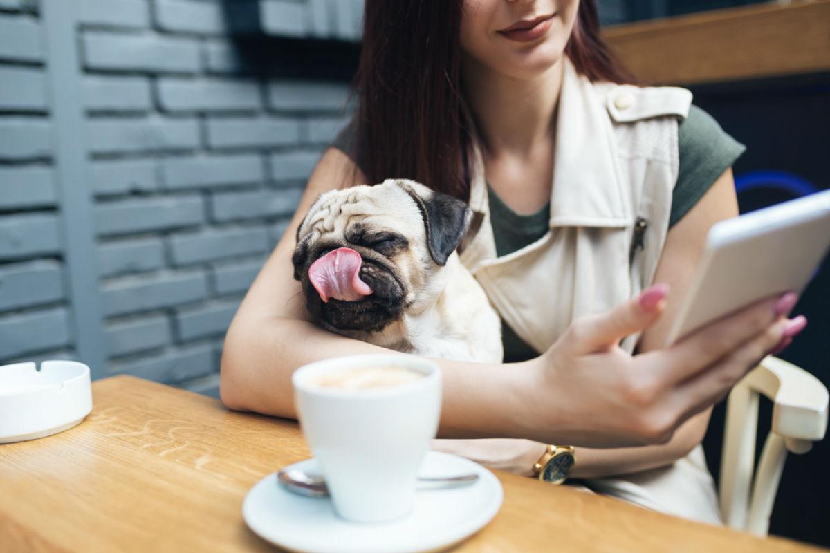restaurantes-convivir-animales mujer cuando quiere enamorar a una mujer