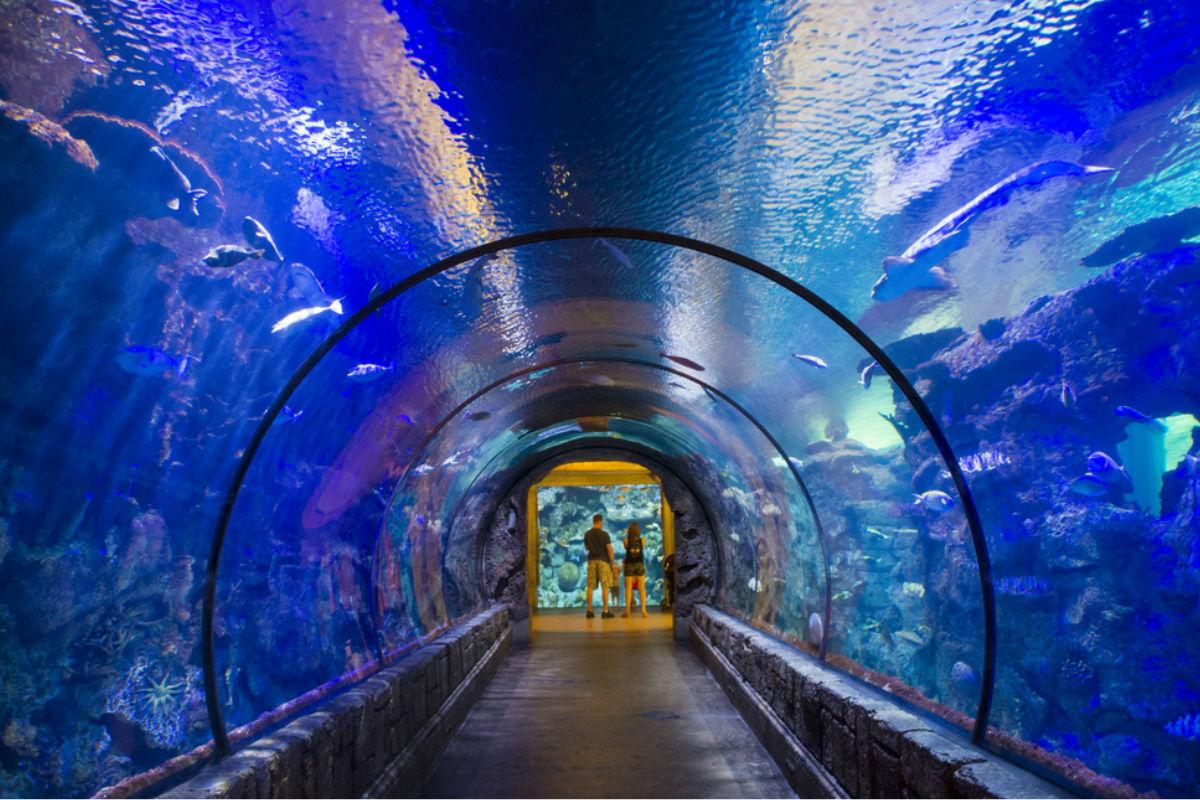 Hotel debajo del agua for Imagenes de hoteles bajo el agua