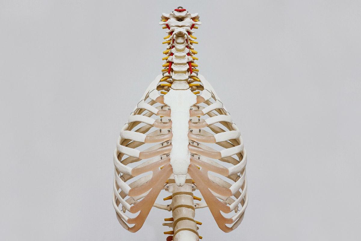 sistema-inmunologico-huesos-pulmones-cuerpo